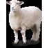Товары для овец (9)